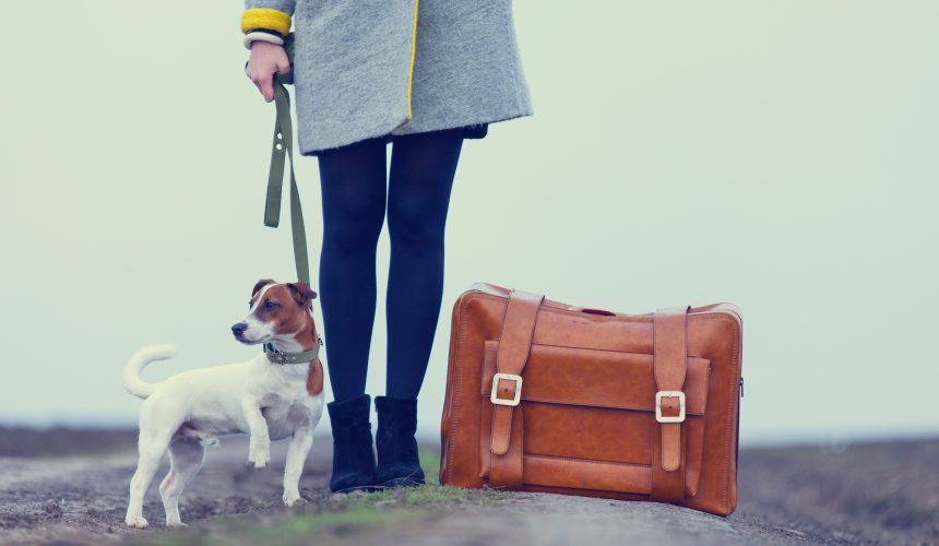 Traveling with your Dog?